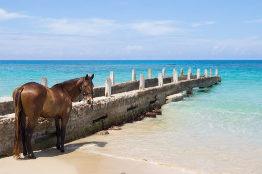 why feed kelp for horses