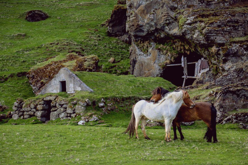 kelp for horses