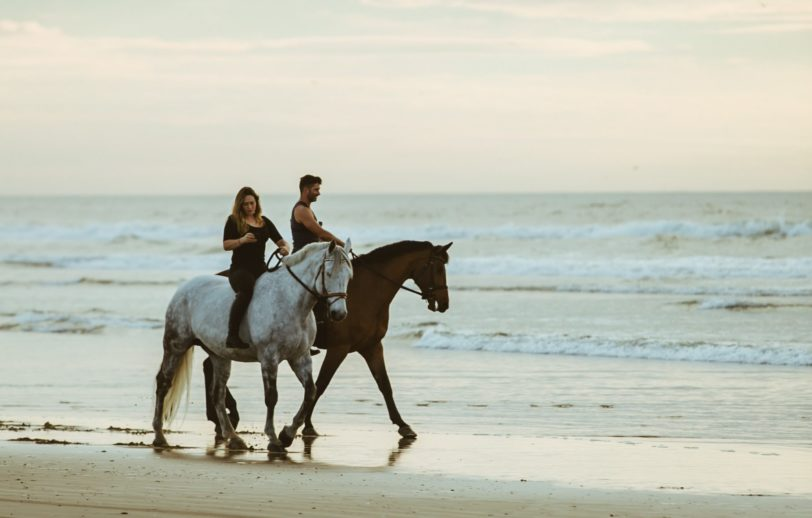 Sea Salt for horses