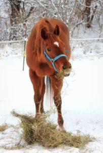 winter horse care