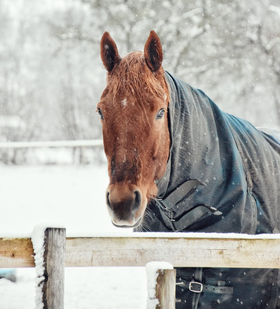 Winter Horse Care 101-The Complete Guide 1