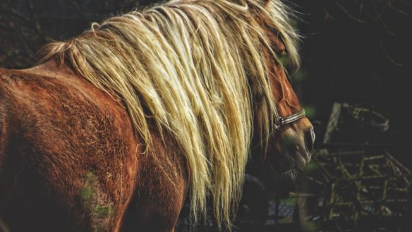 overweight senior horse