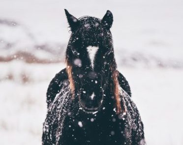 how to make electrolytes for horses