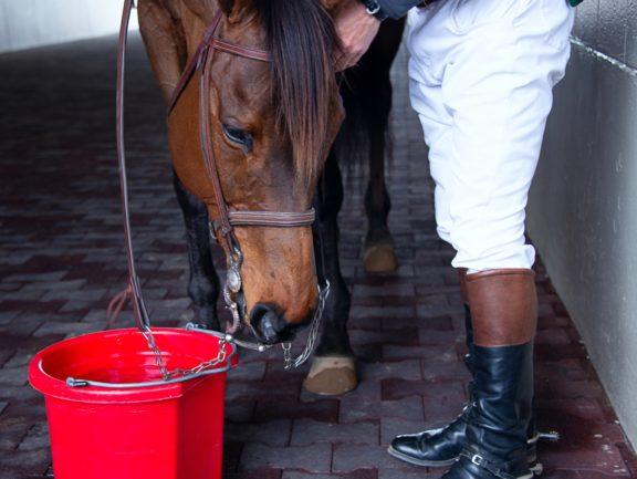 electrolyte imbalance in horses