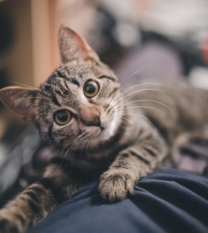 Herbal Cat Dewormer
