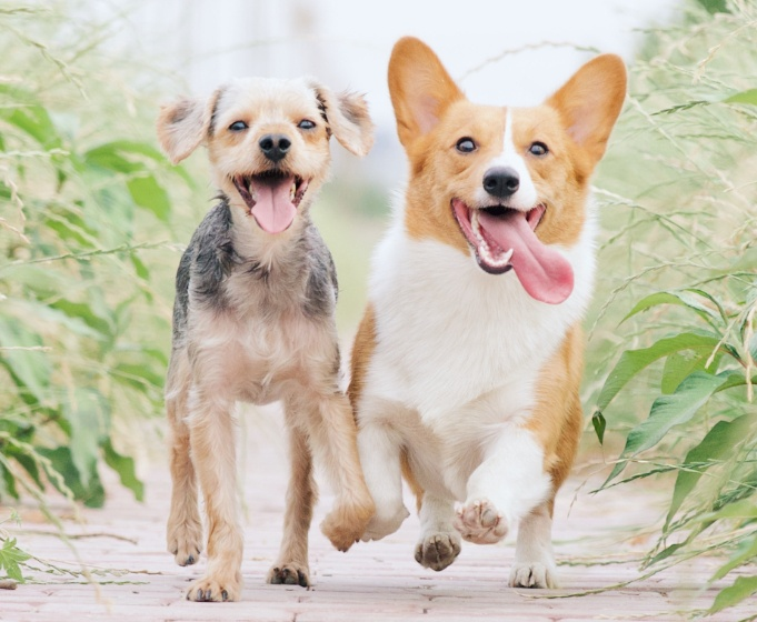 herbal dog dewormer